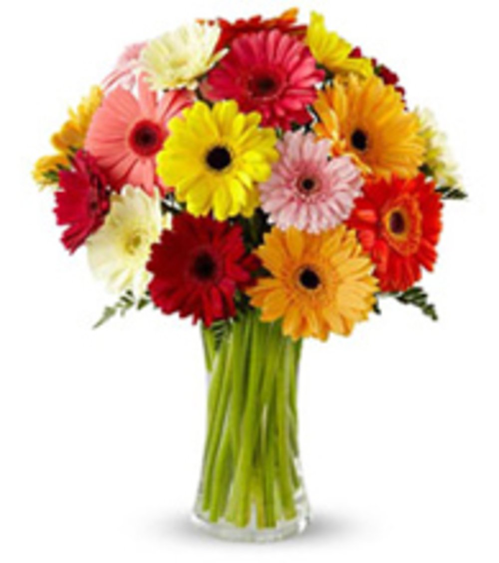 Radiant Gerberas Arrangement